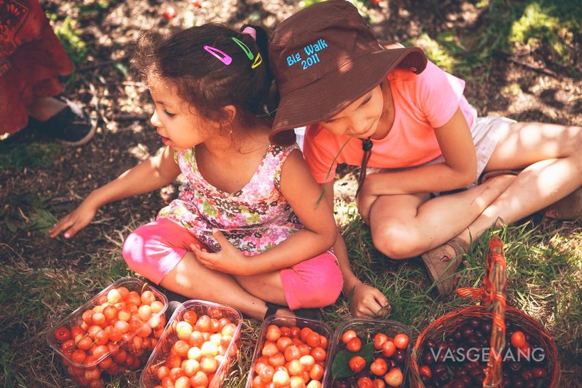 cerescherries-web-0937.jpg
