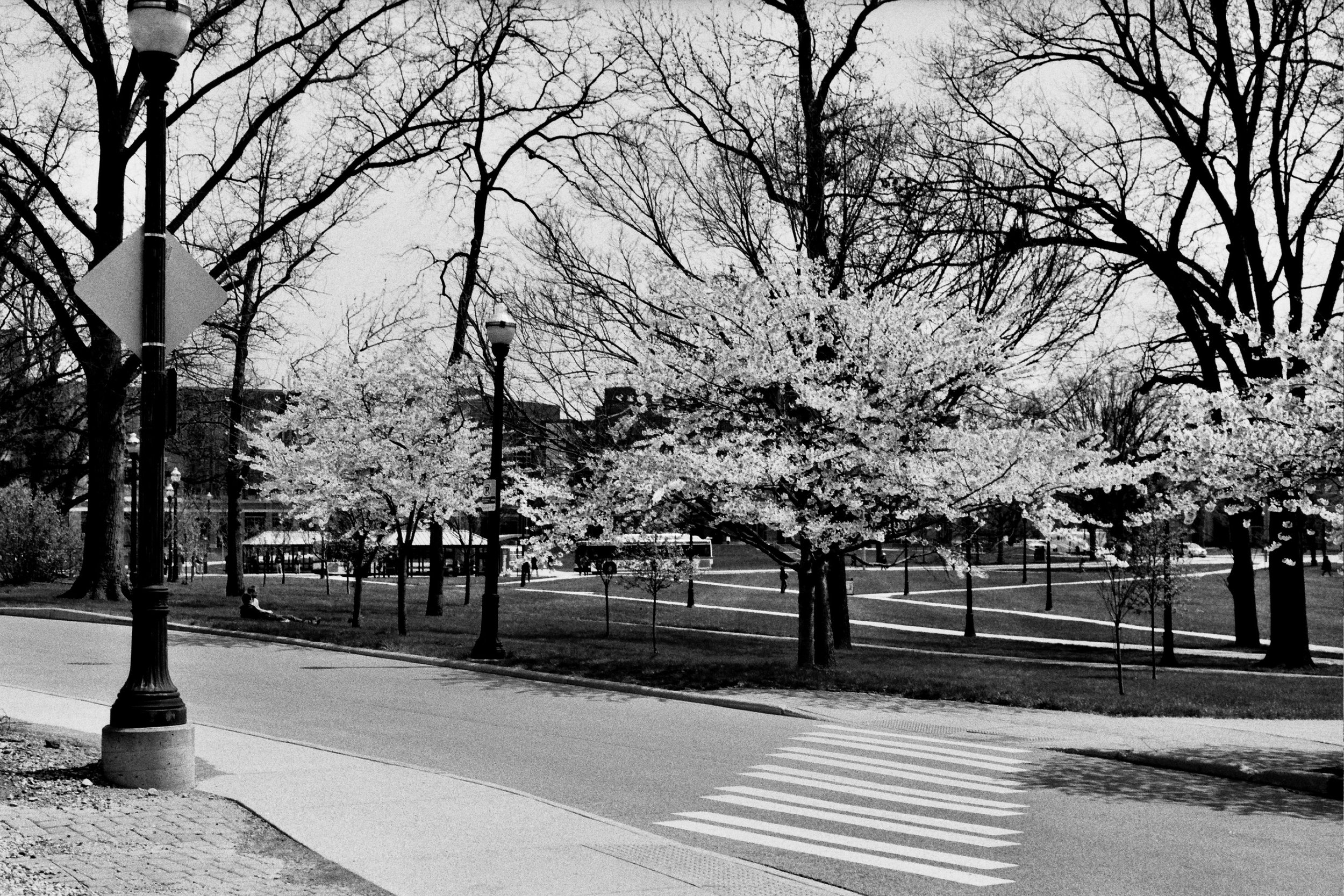 South Campus in Spring