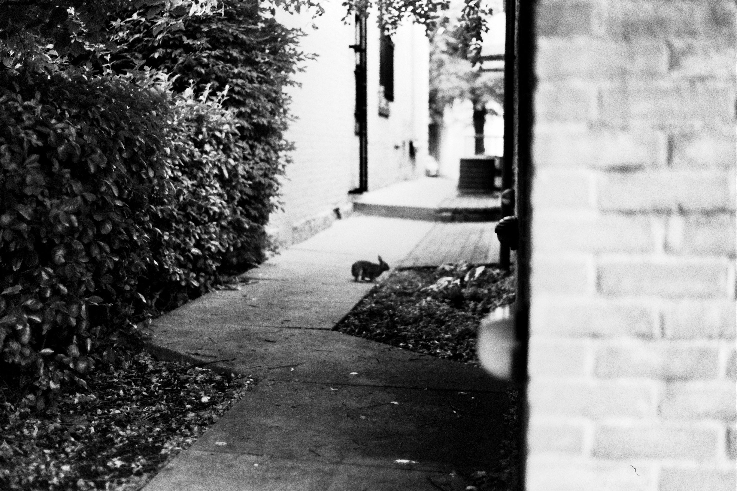 Alley Bun