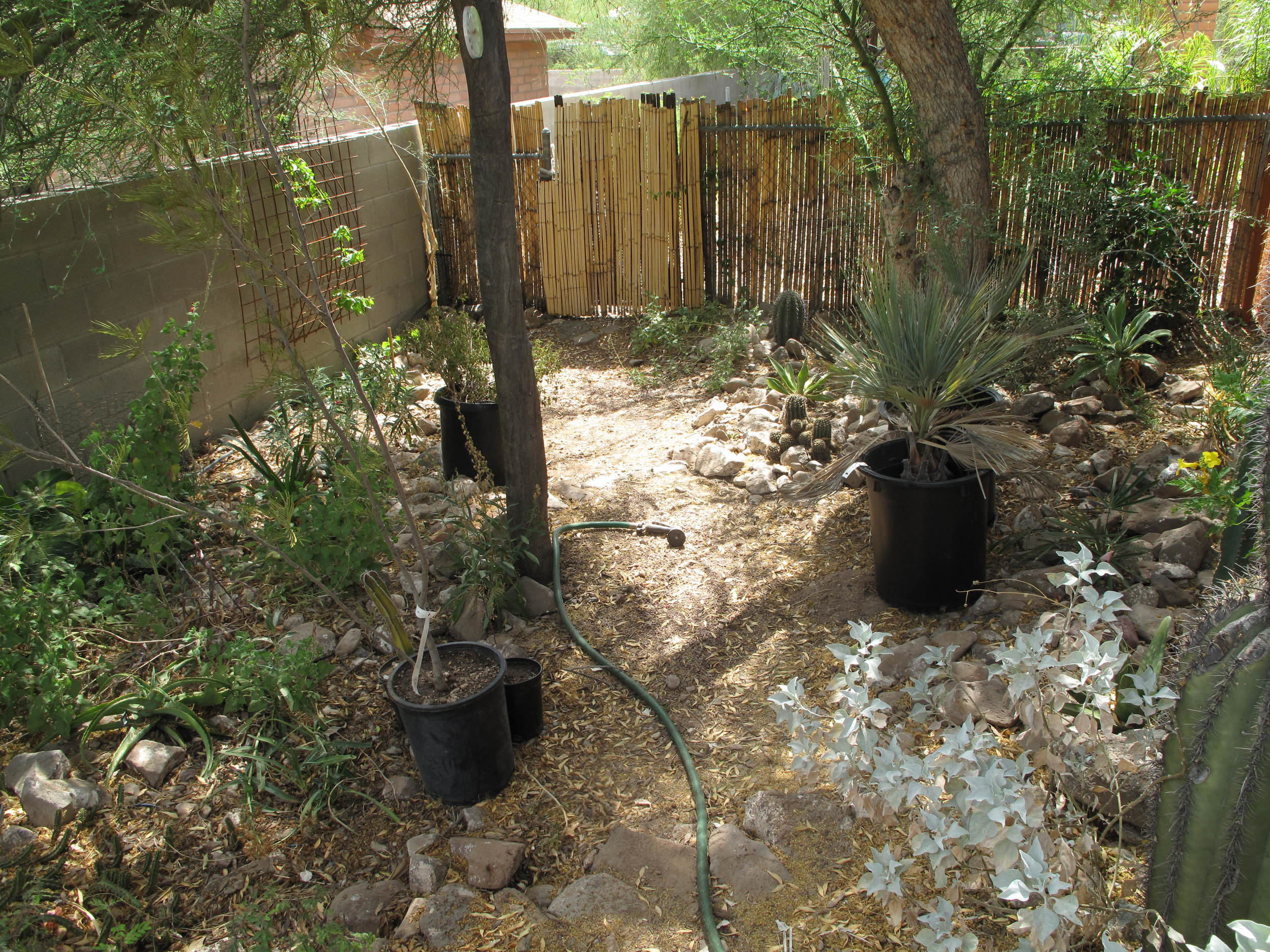 This is Dan and Tony's side yard (opposite the Quail Manor). Lovely isn't it. The things in the pots are the plants I transplanted.