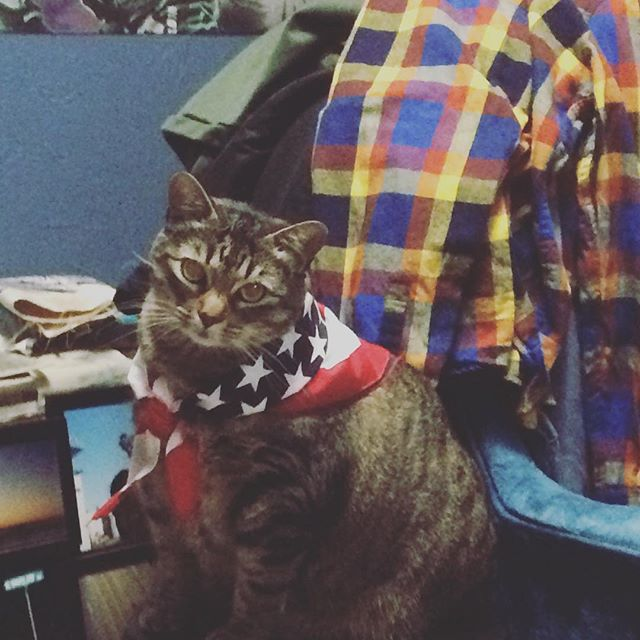 #americas #cats