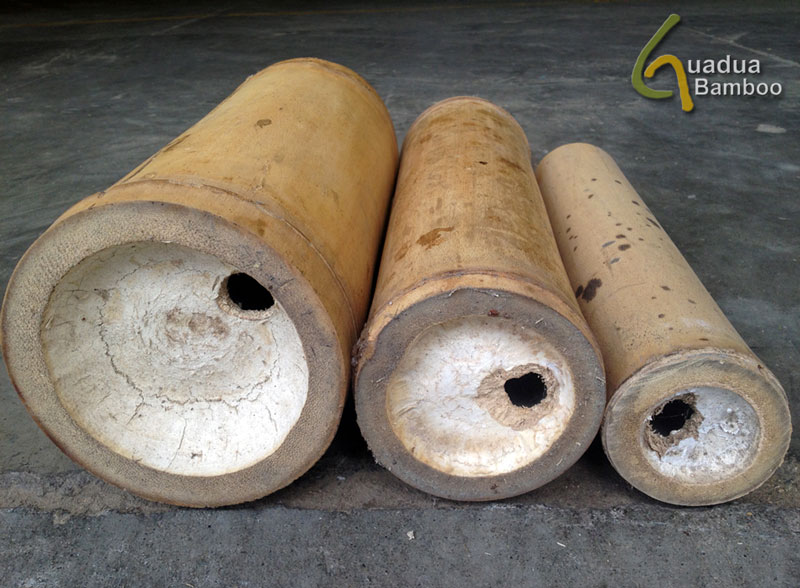 Guadua Bamboo Poles Diameter