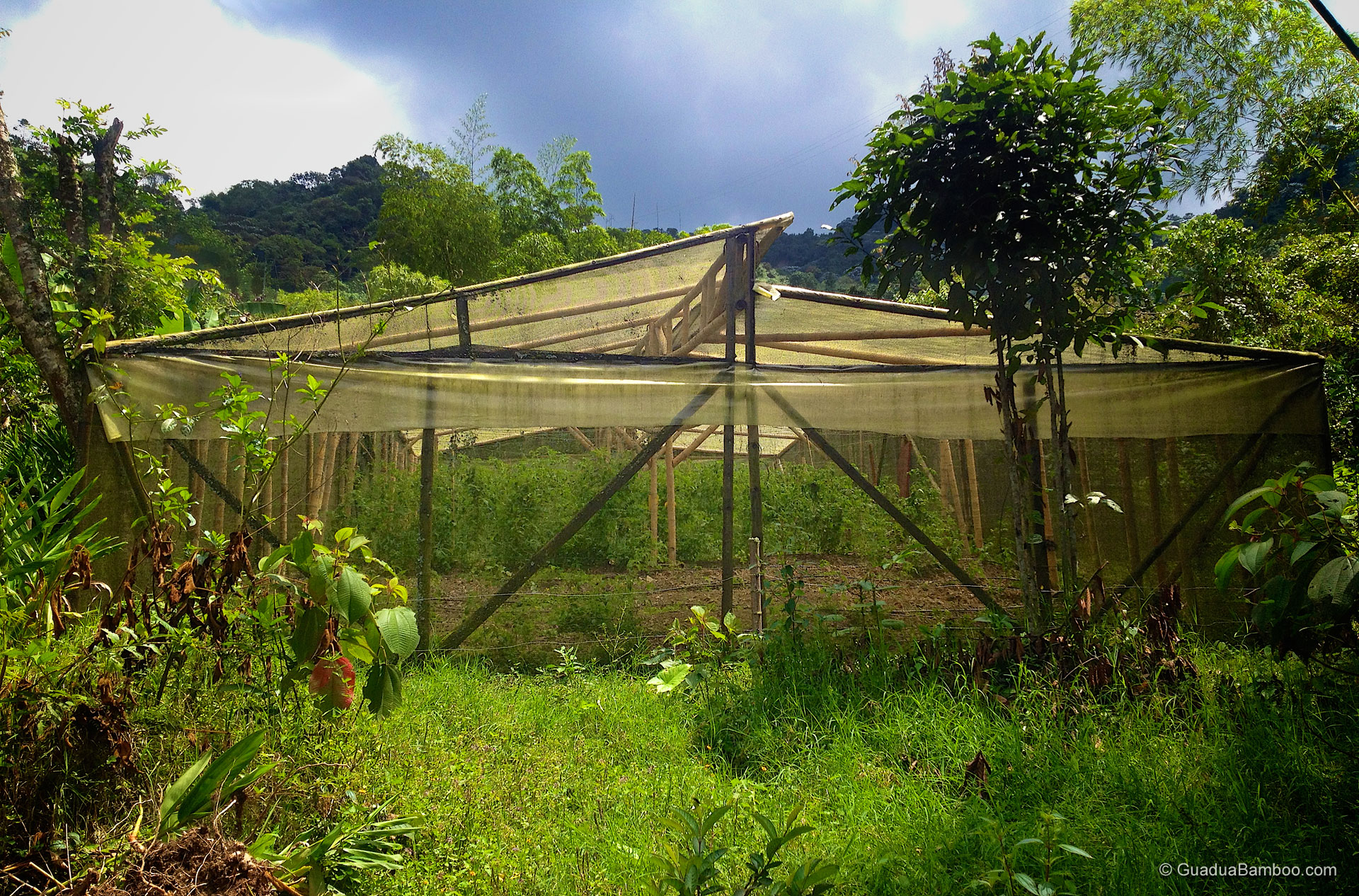 Guadua Bamboo Greenhouse