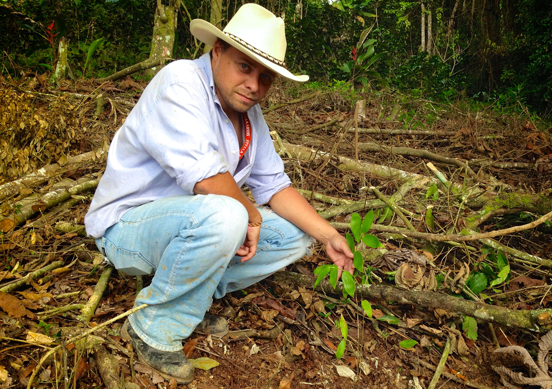 Planting the first Guadua's in Colombia