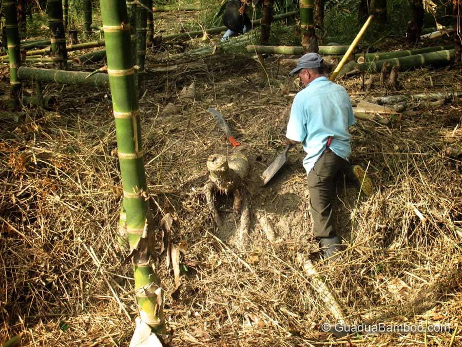 bamboo_polo_balls-1.jpg