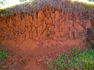 Red laterite soil