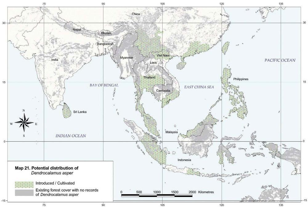 Dendrocalamus asper Distribution Map