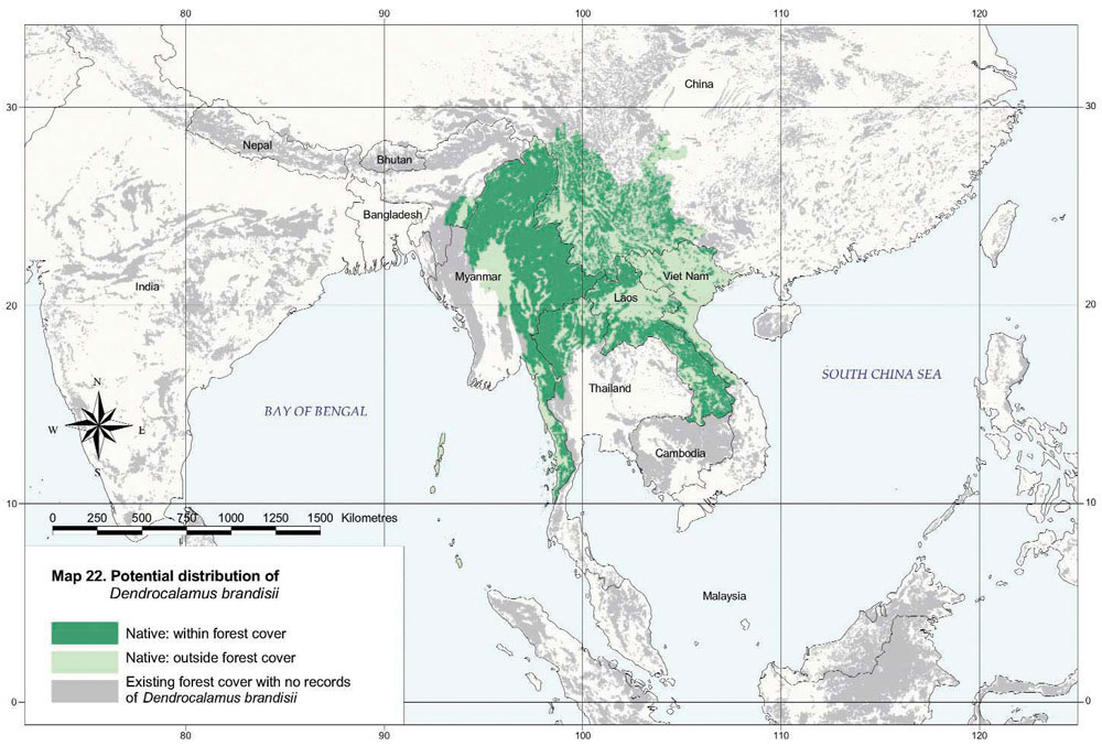 Dendrocalamus brandisii Distribution Map