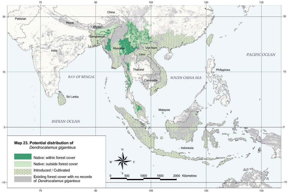 Dendrocalamus giganteus Distribution Map