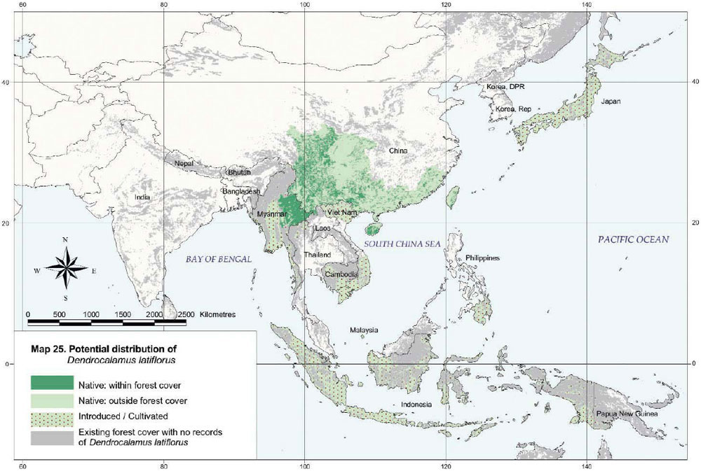 Dendrocalamus latiflorus Distribution Map