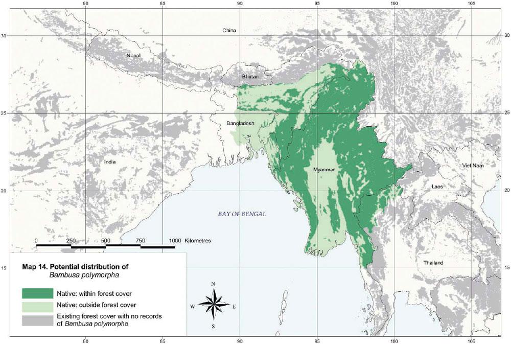 Bambusa polymorpha Distribution Map