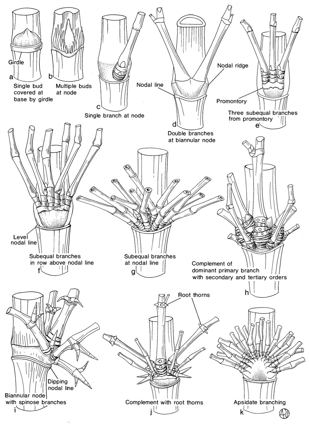 identification-bamboo-branches.jpg