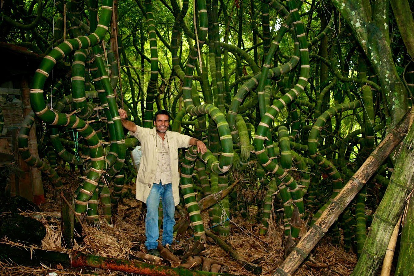 Twisted Guadua Bamboo
