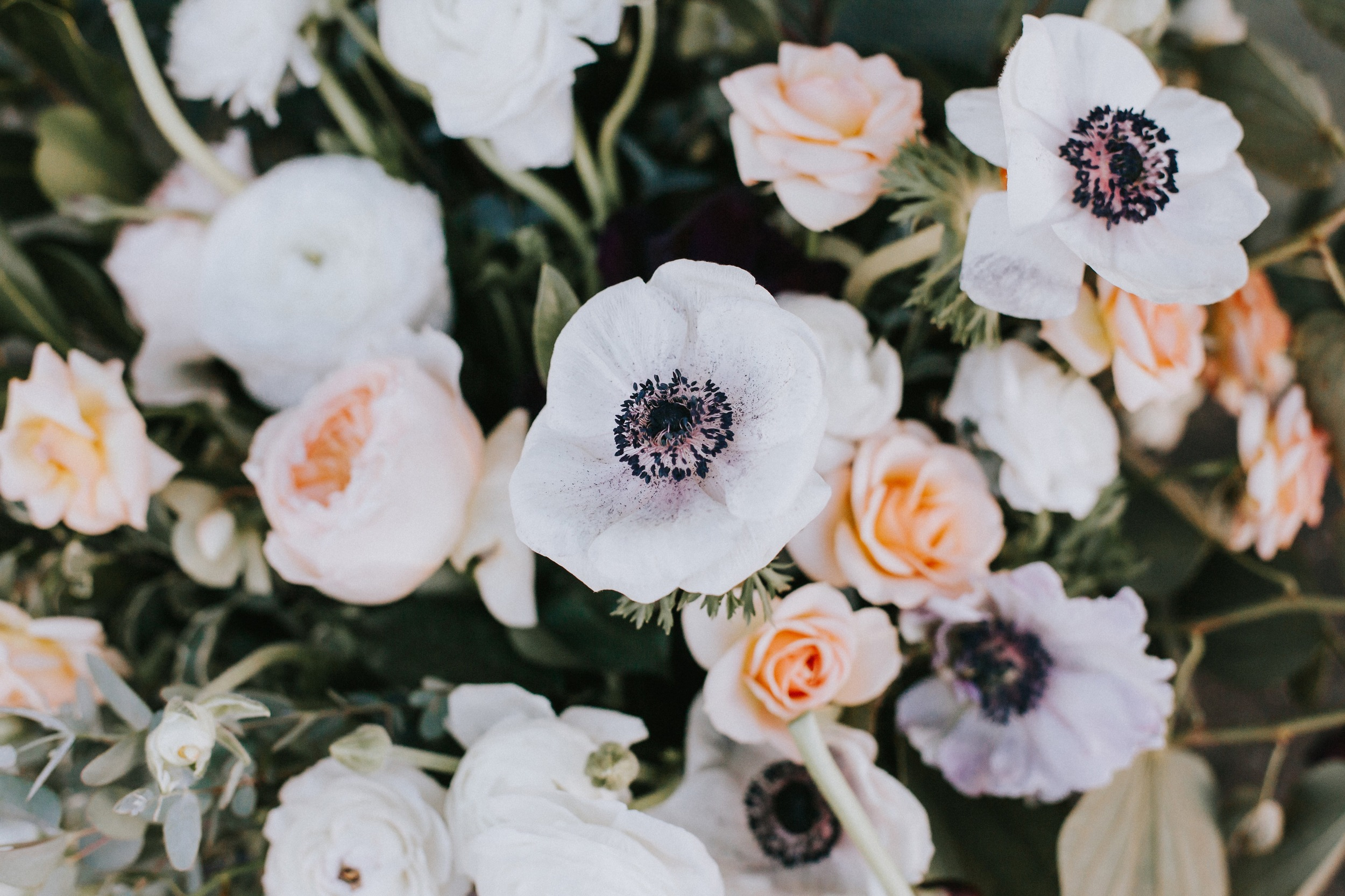 anemoneflower.jpg