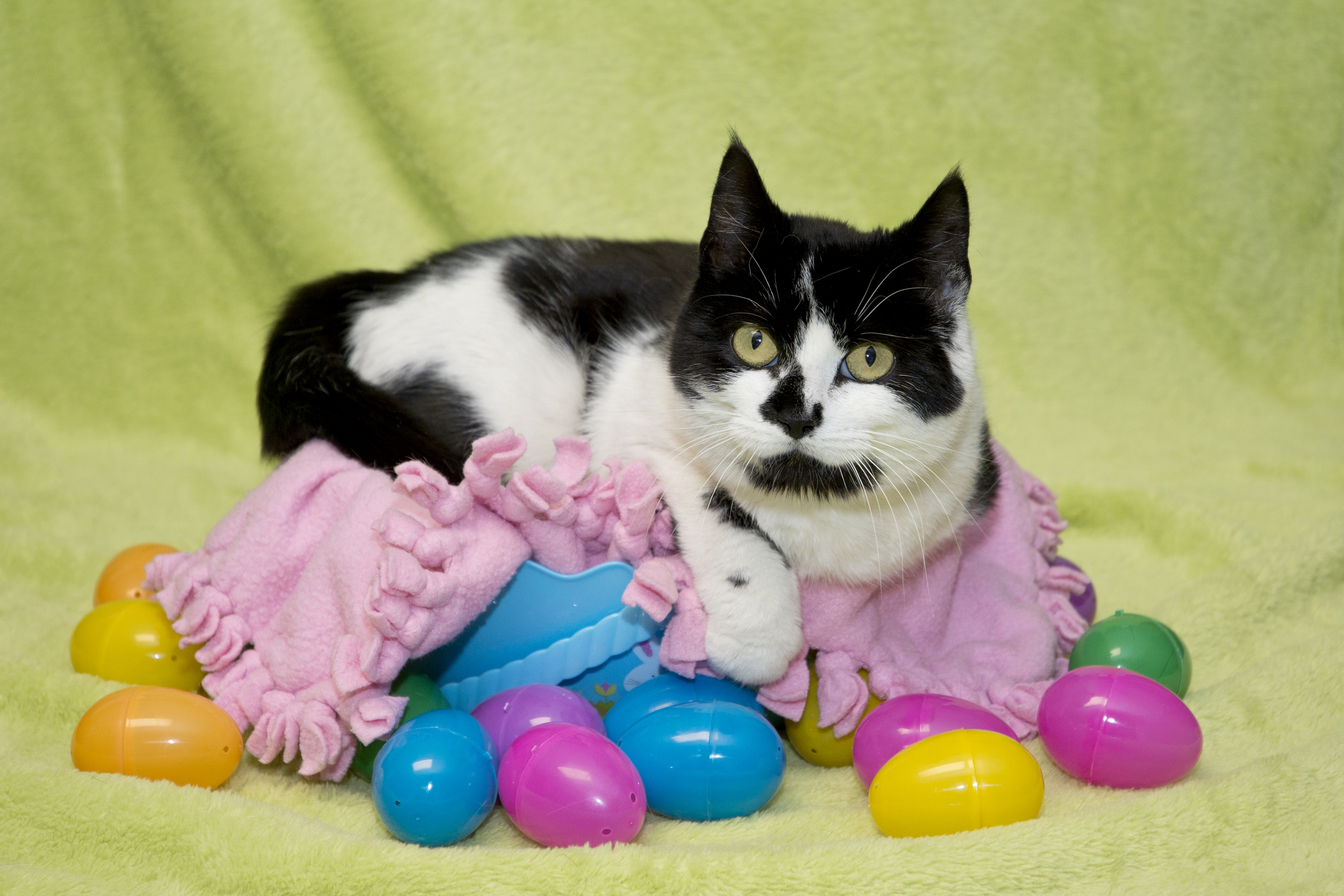 EasterCat.jpg