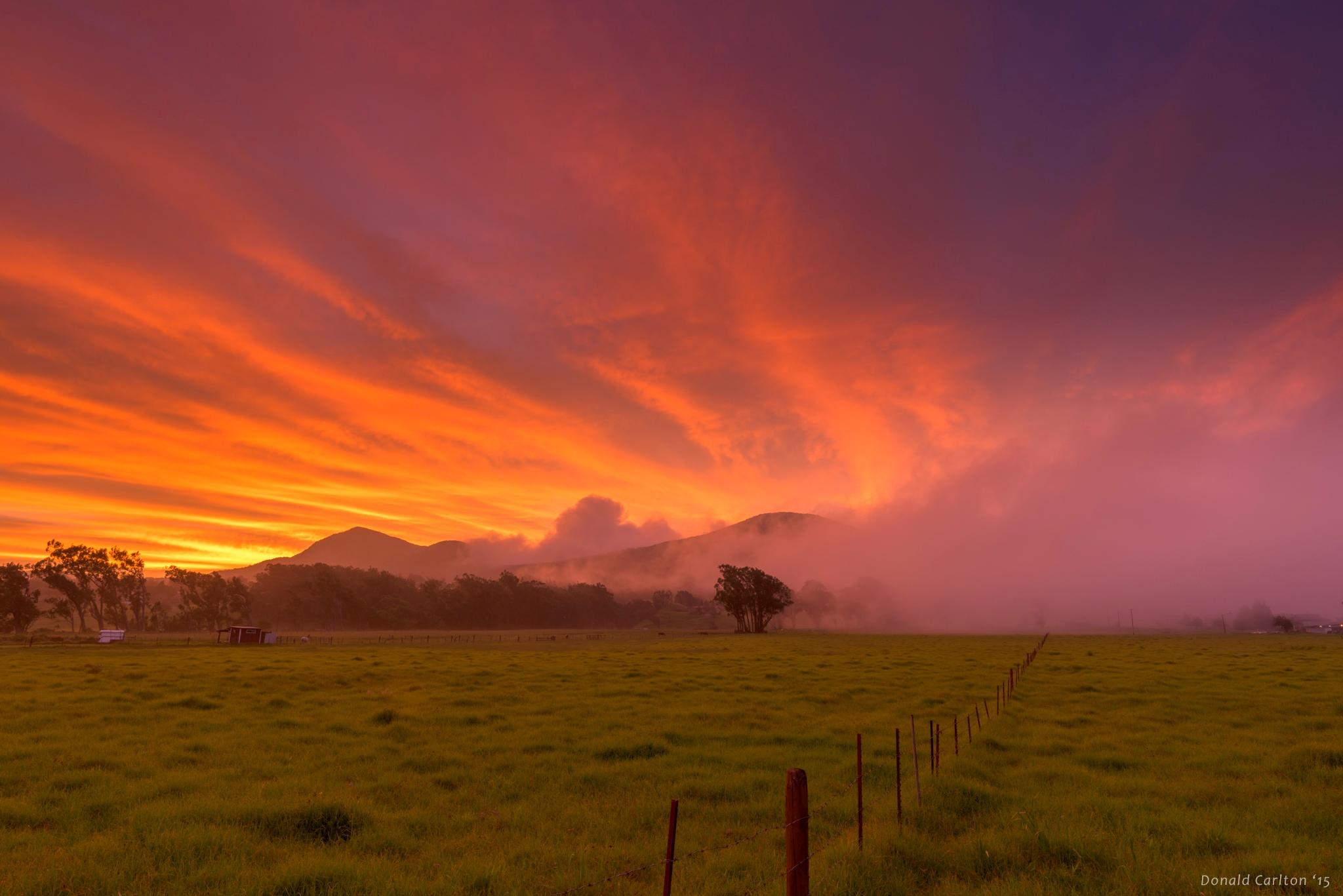 Donald _Carlton_Landscape-031.jpg