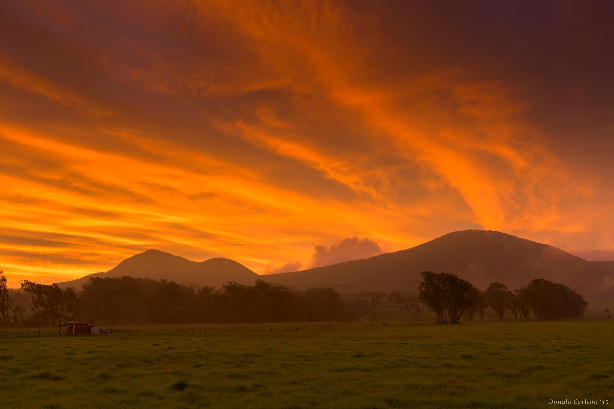 Donald _Carlton_Landscape-030.jpg