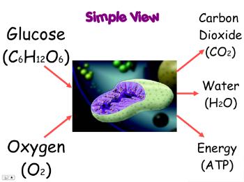 calciumglucose.png