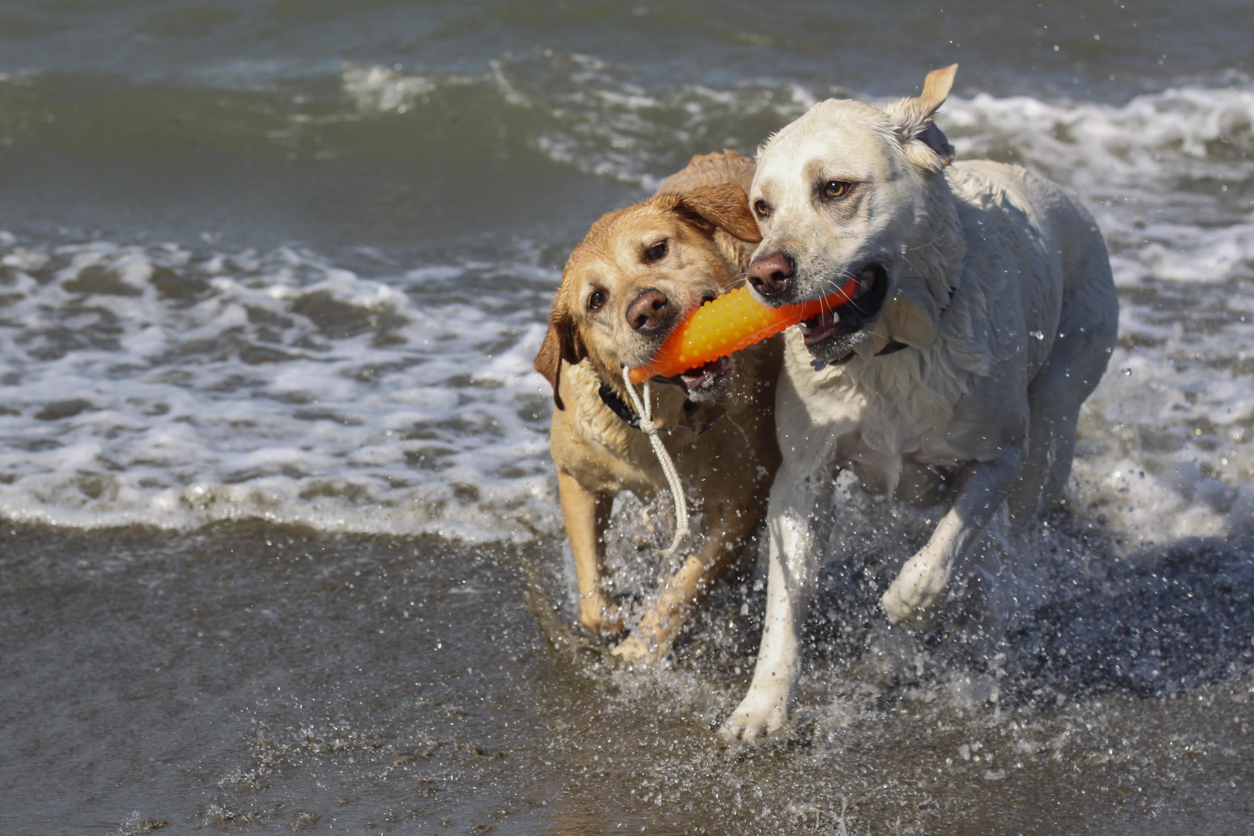 Dogs Beach 10-13-2018-9.jpg