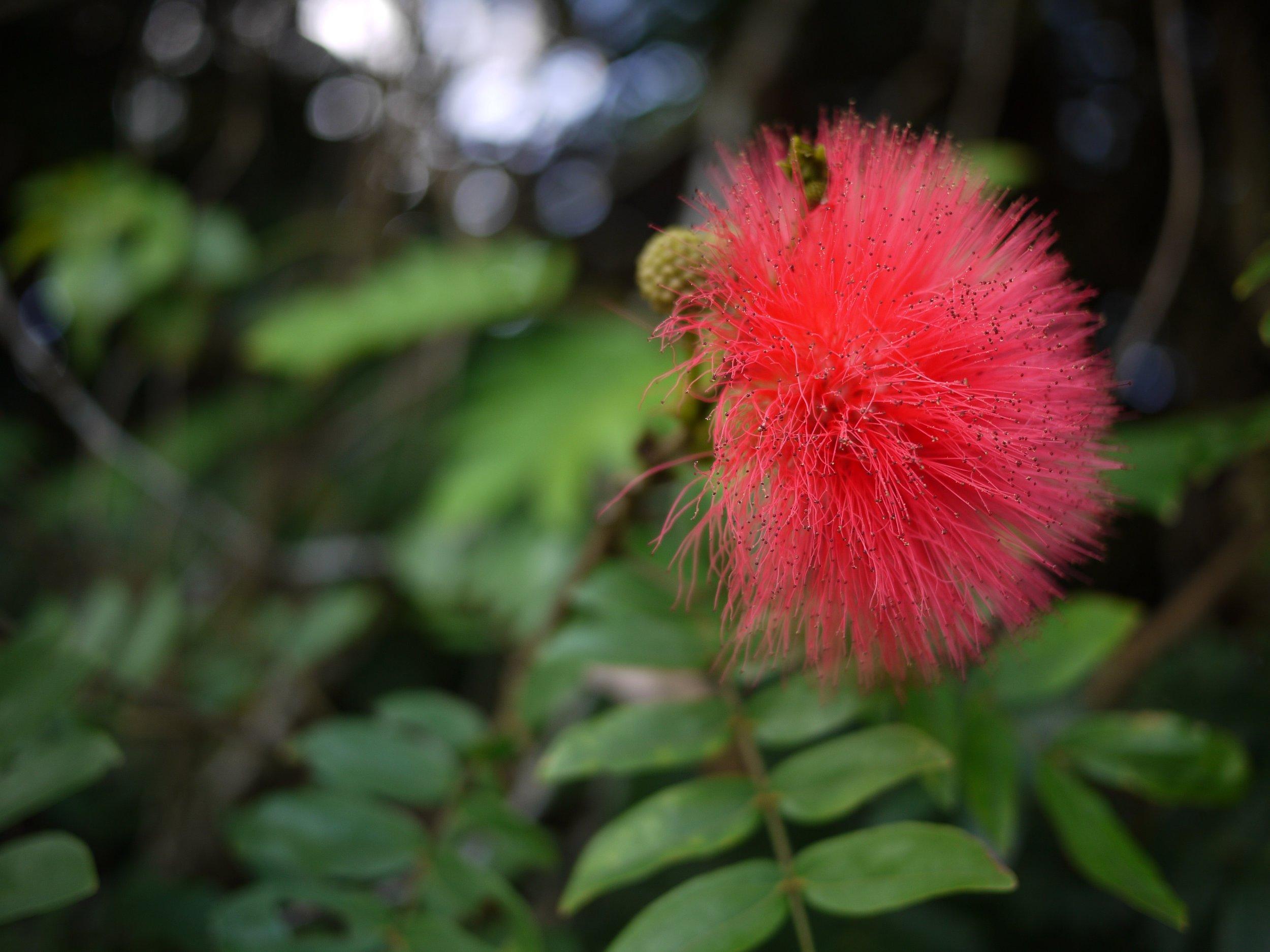 Fuzzy flower.jpg