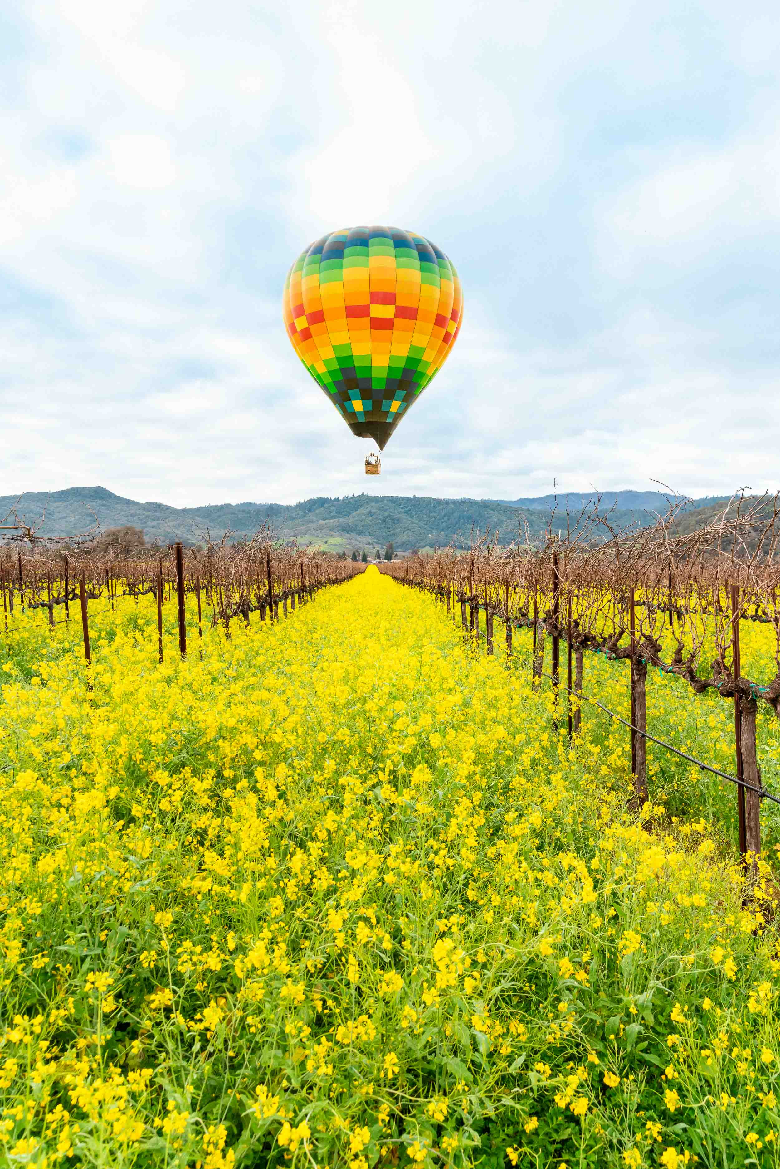 Hot air balloon ride in Napa Valley with mustard flowers in bloom for Visit Napa magazine.
