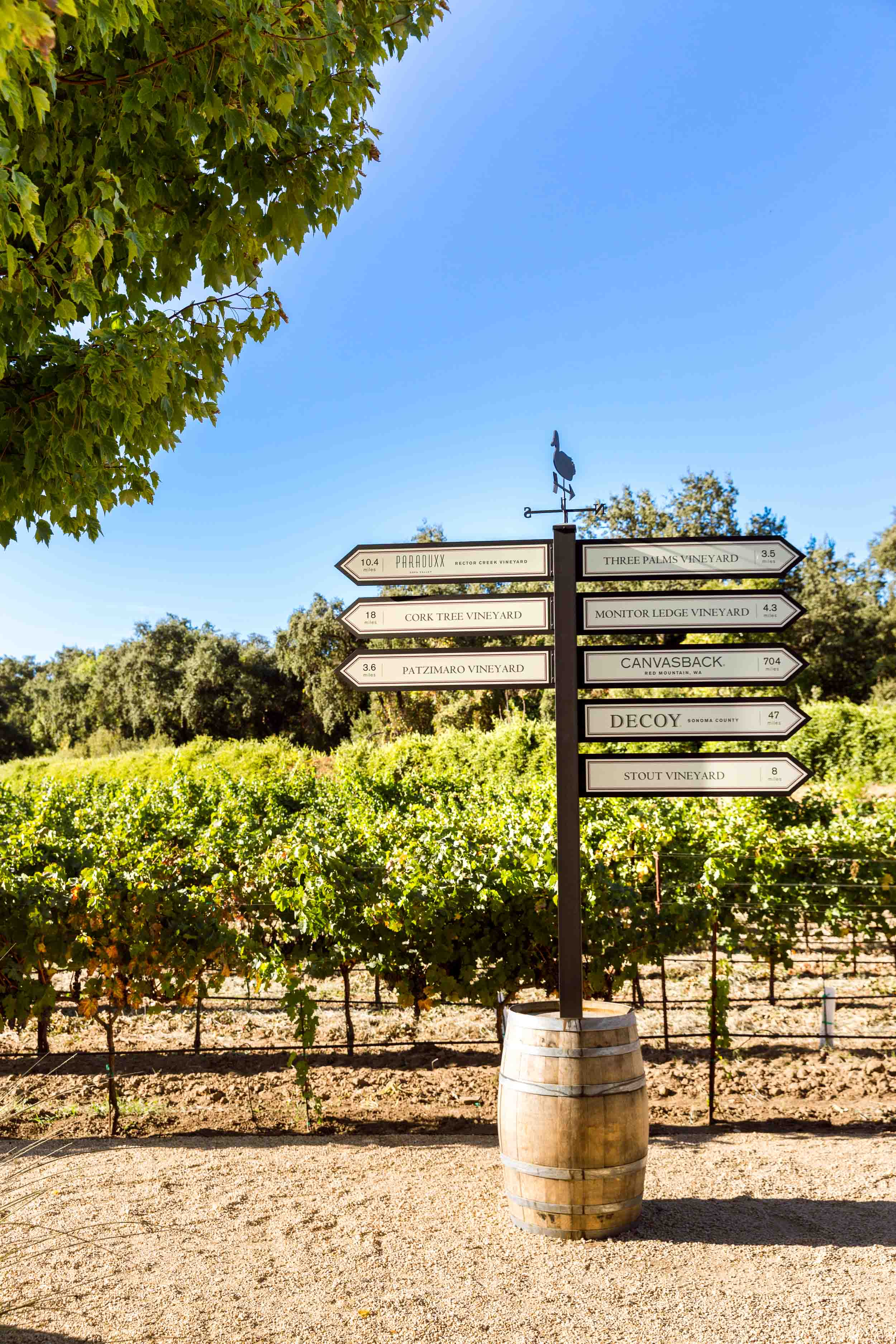 Duckhorn Vineyards, known for their Three Palms Merlot, photographed for Wine Spectator.