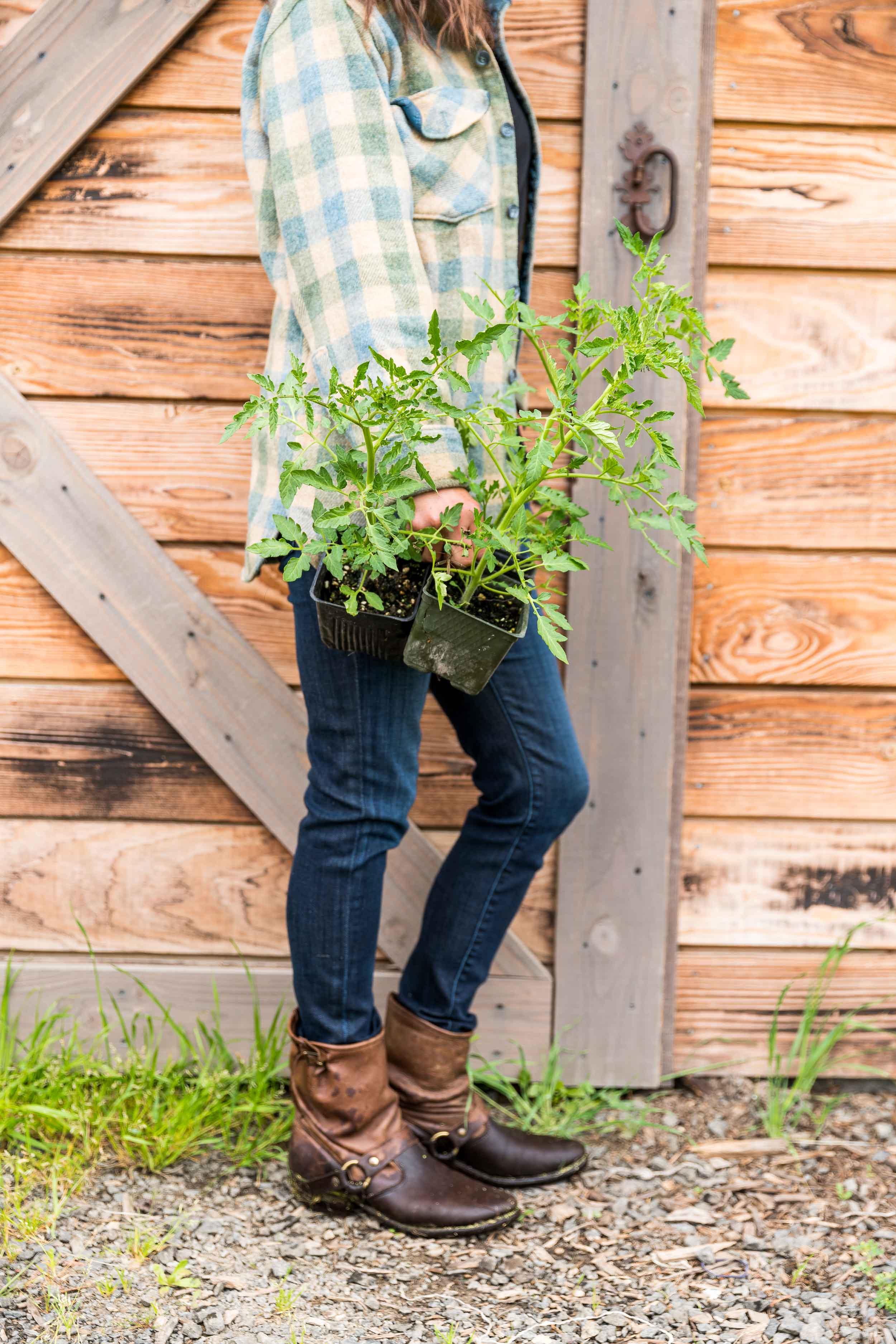 Caiti Hachmyer of Red H farm in Sebastopol, CA.