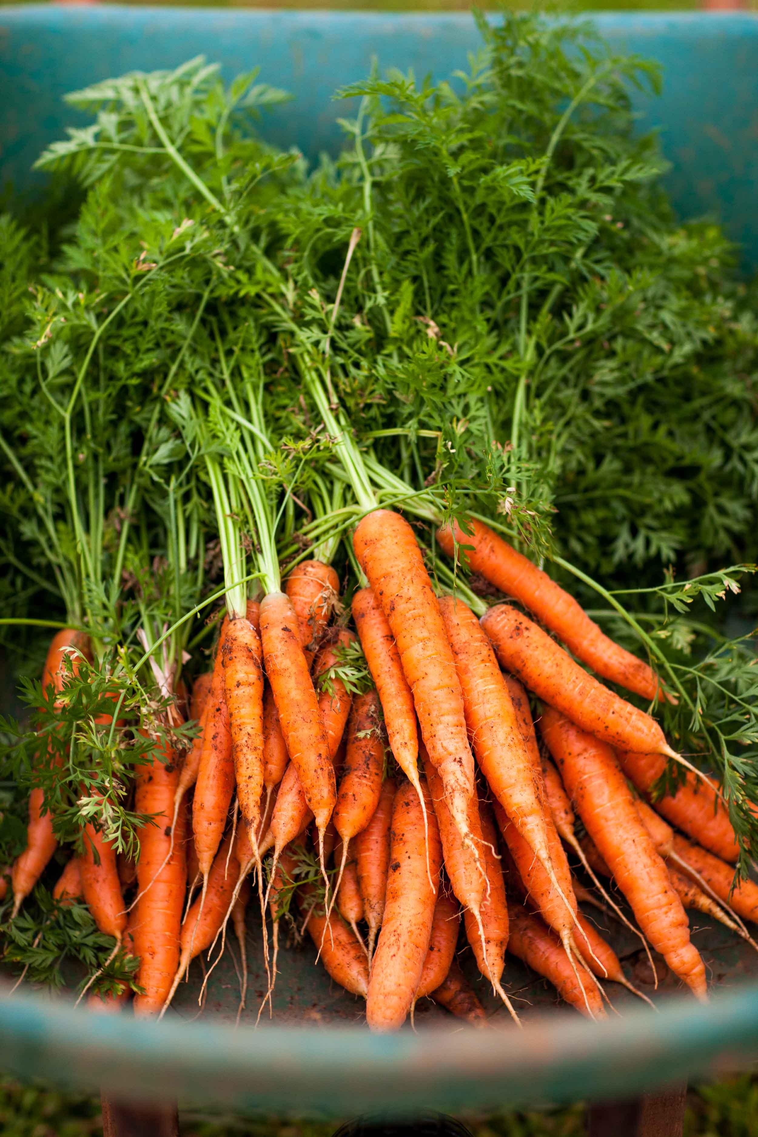 NatandCody-Agriculture-27.jpg