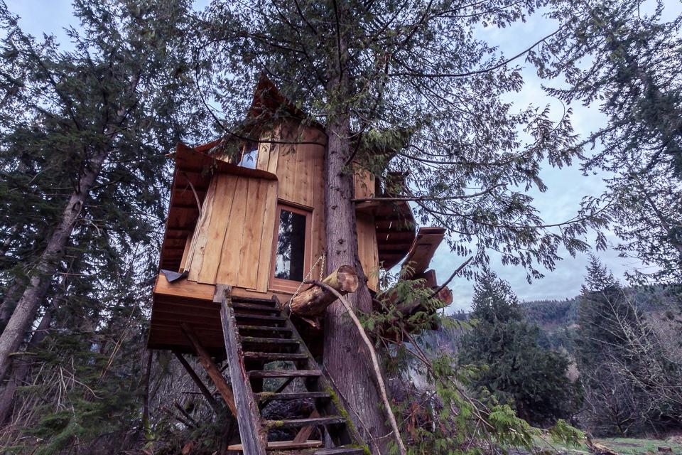 Tree House, under construction.