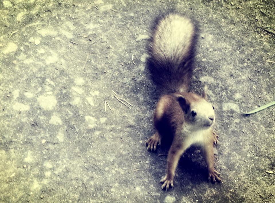 spastic squirrel Rachael Renee.jpg