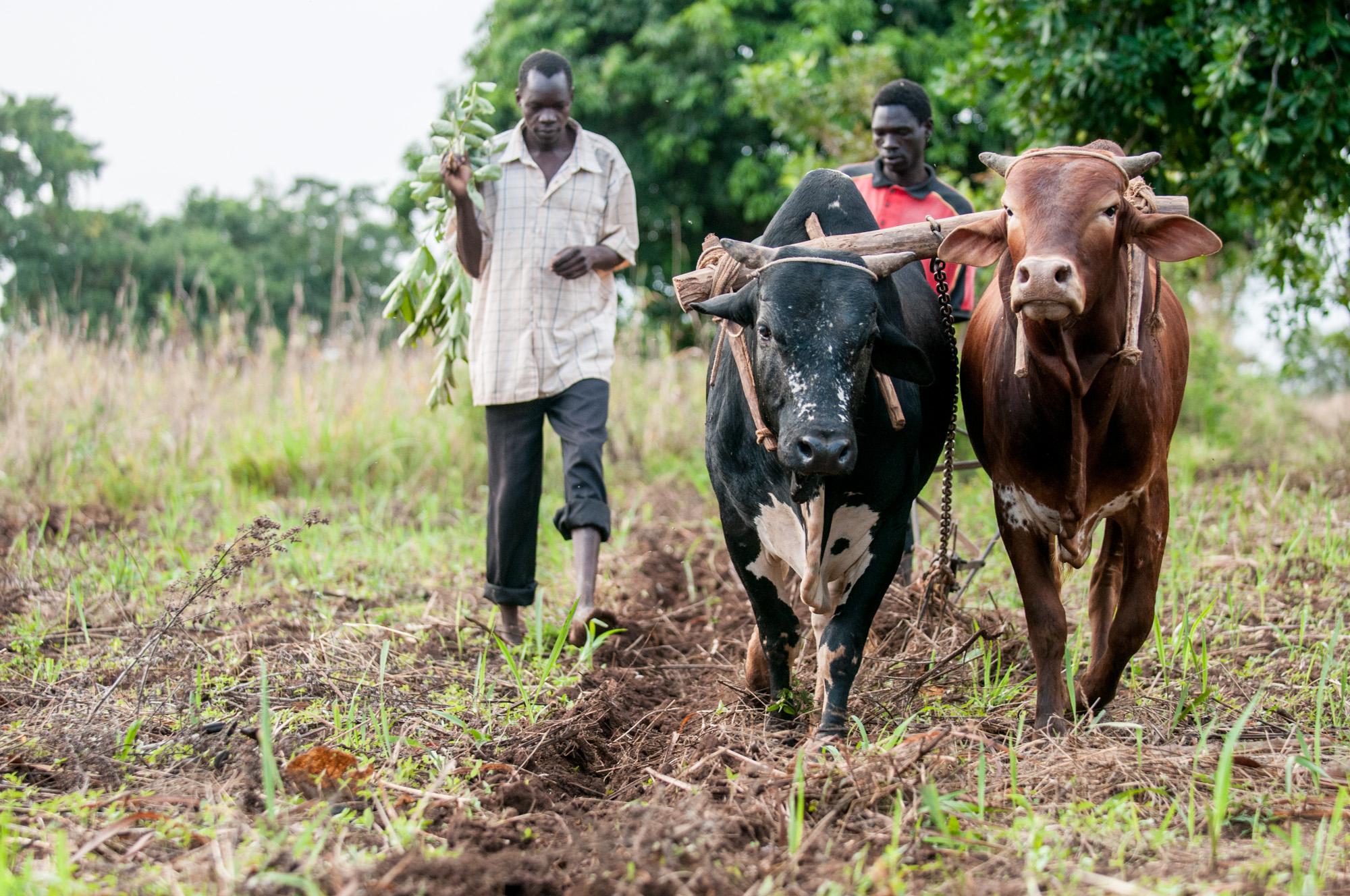 A Farmer in Rural Uganda