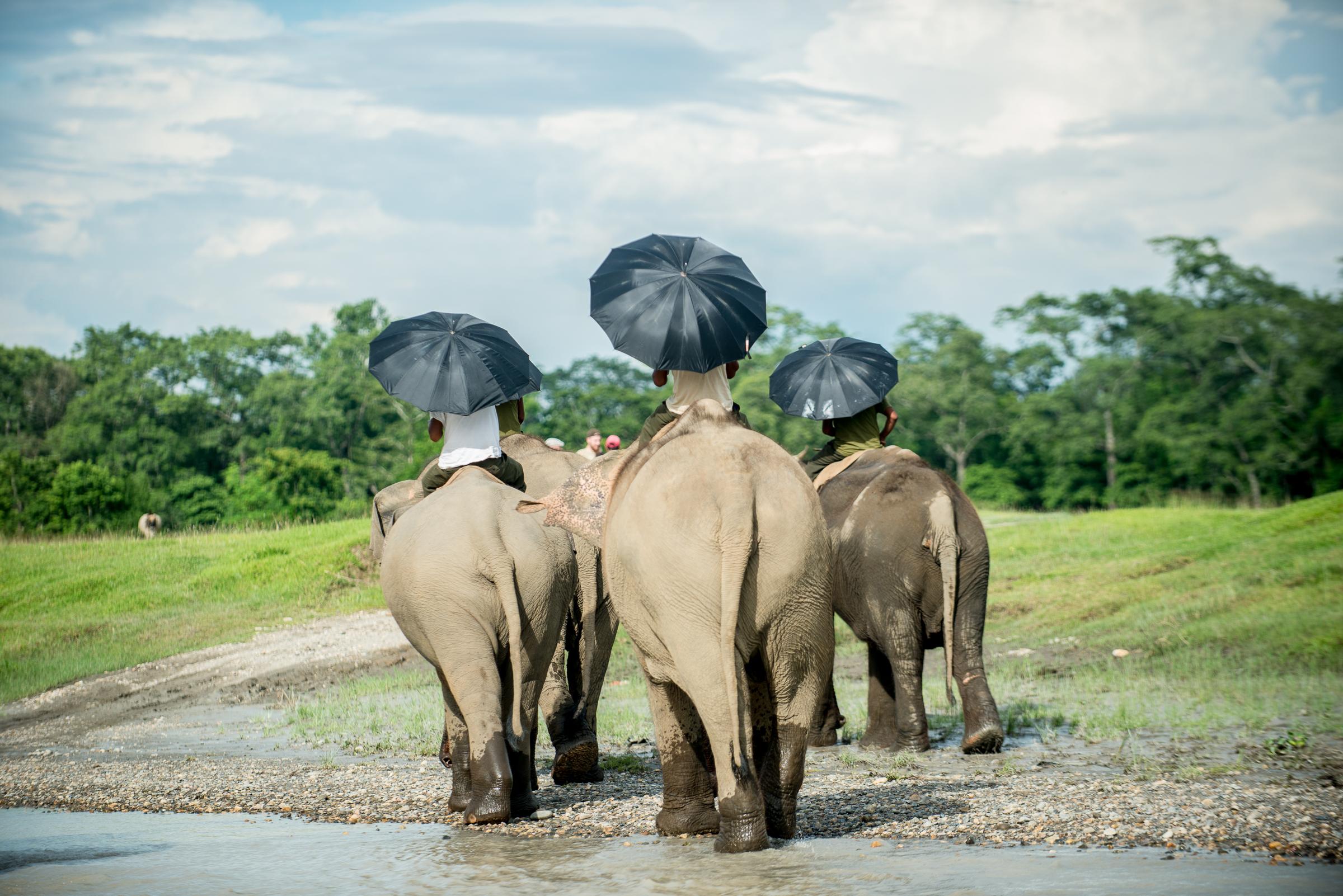 Chain Free Elephants in Nepal