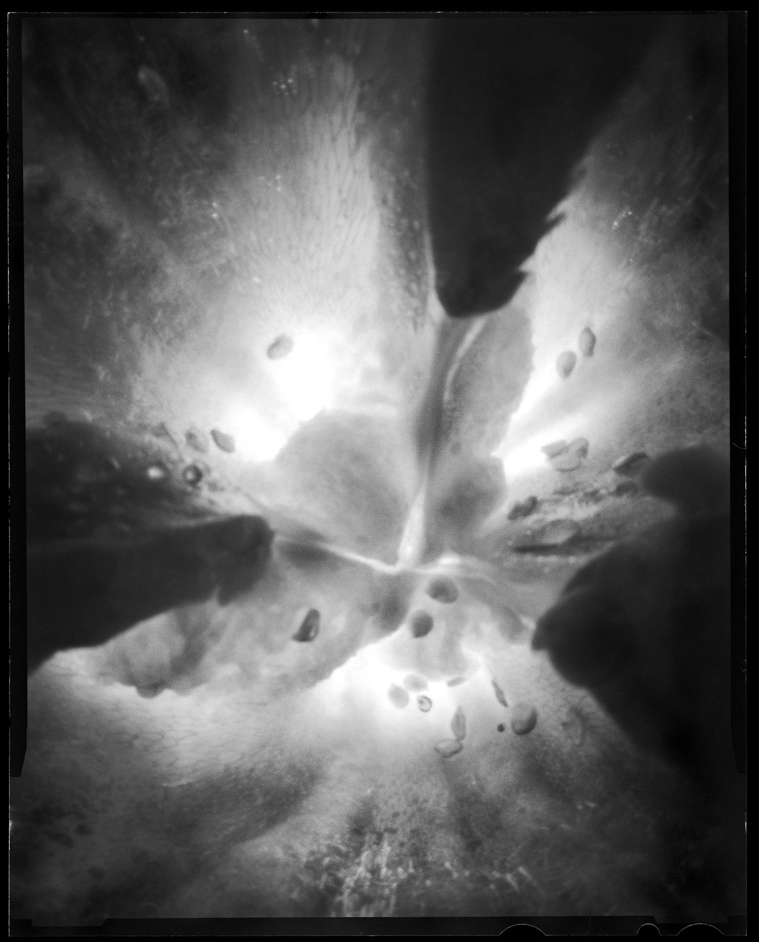 bio graphics  / exposure time ≈ 00:05:00 © 2012 svemart