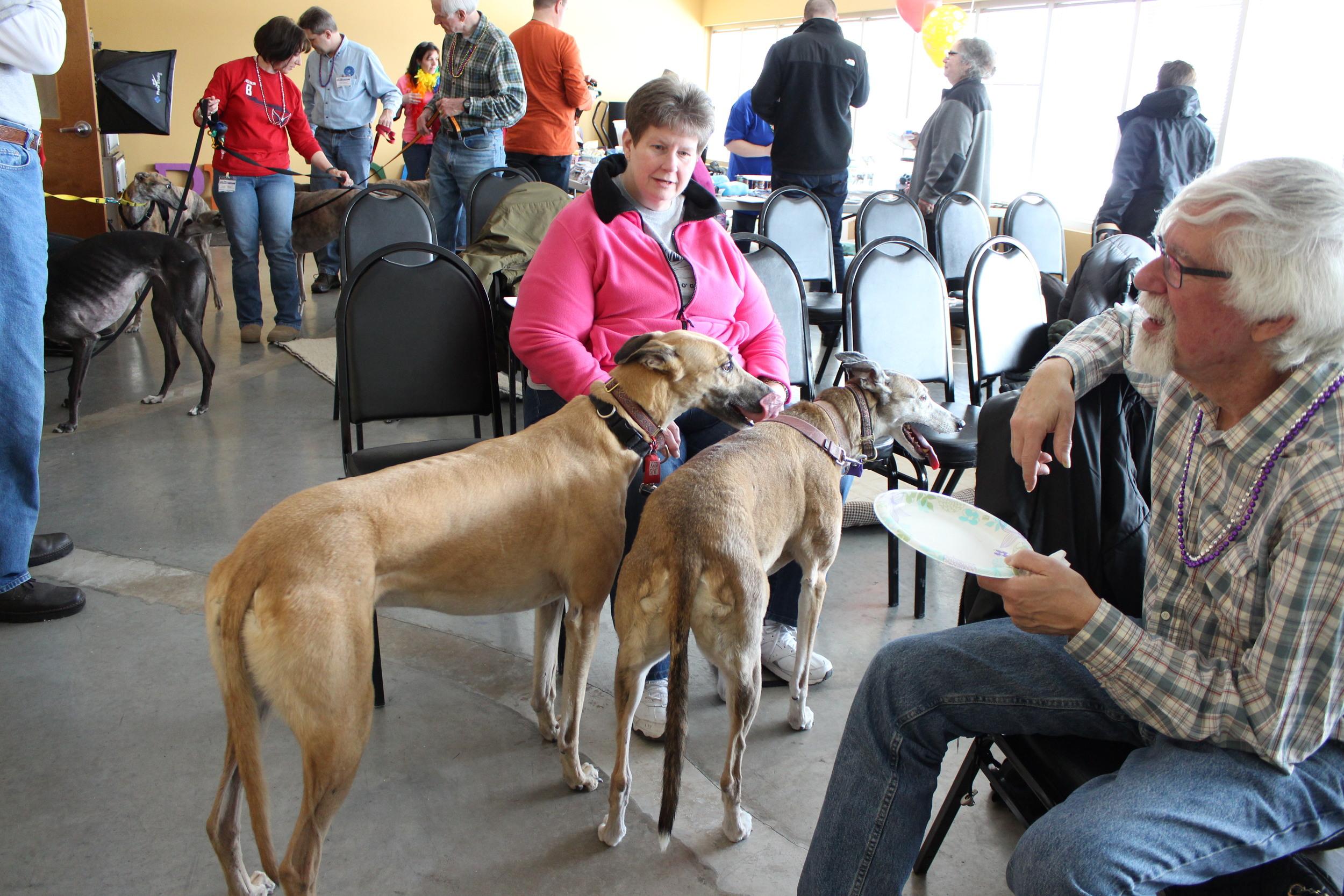 The lovely Kim Barnett brought her hounds to visit!