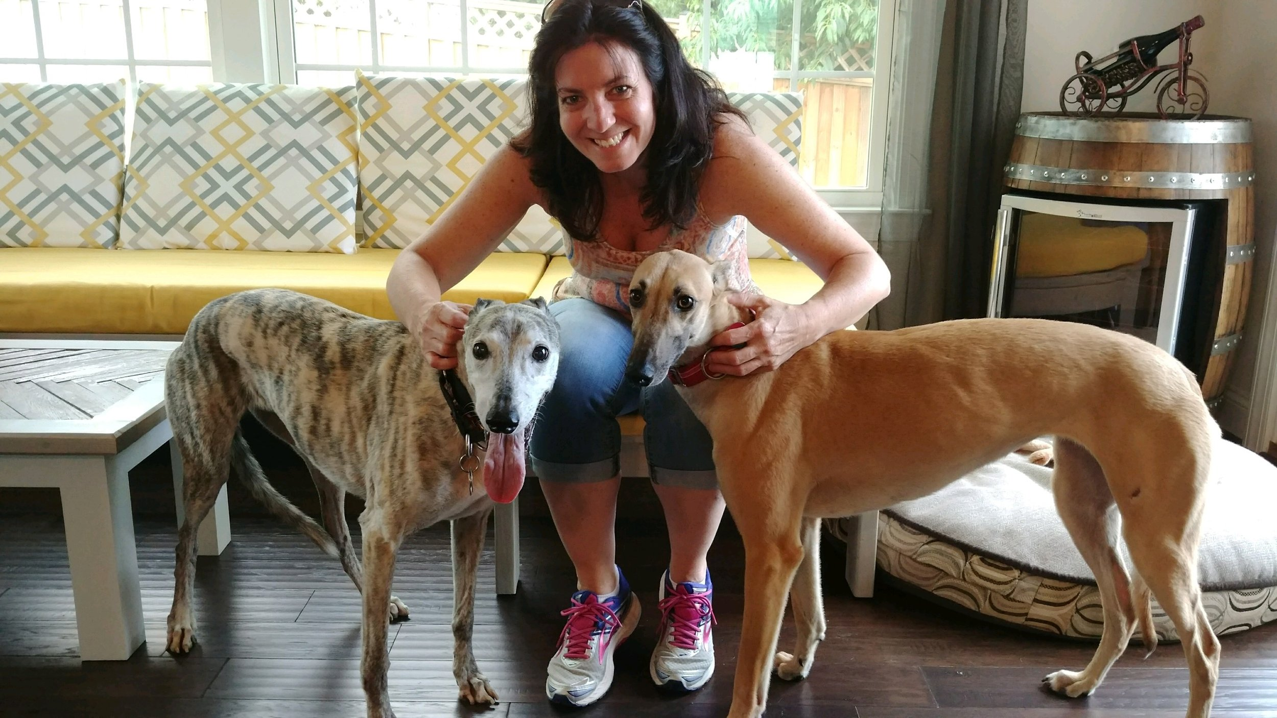 "Christine is not only a long time member but has been a long time board member for BRGA. She is an amazing ambassador for our wonderful Greyhounds.  After recently losing her buddy, Solo, Christine and Gracie knew they had lots more love to give!  They welcomed Joy into their home. Joy is a sweet, shy, red fawn Grey who immediately loved her new place...she ""Roached"" the first day!!  BRGA is so excited to have Joy in the pack!"