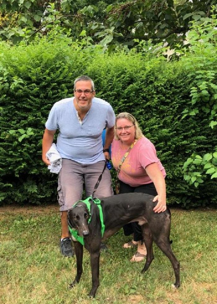 BRGA is very excited to see Blockhead, now called Roscoe go to his new wonderful home with Lisa and Dean in Rockville! Roscoe came to us as as a foster. He adjusted very quickly to a new home life thanks to our caring volunteer family!  Roscoe will now be a pampered pup at home while Lisa and Mark work from home. He will also enjoy having a new sister, Maggie, the family's other Greyhound!  Congratulations to Lisa, Mark and Roscoe!