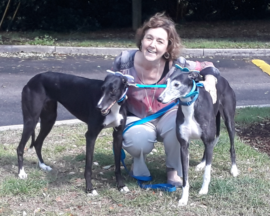 Julie and her Grey, Katy are active volunteers for BRGA and decided it was time for Katy to have a sister. Lo and behold, her real half-sister, Mega Gabija, was ready to retire from racing! Gabby is now a new Hardee Hero Hound graduate and has almost 50 learned commands! She is a shy, sweet girl but loves lots of pats and belly rubs. If you are out and about at any of BRGA's events, you may get to see Katy and Gabby sharing lots of attention!  Congratulations to Julie with Katy and now Gabby!