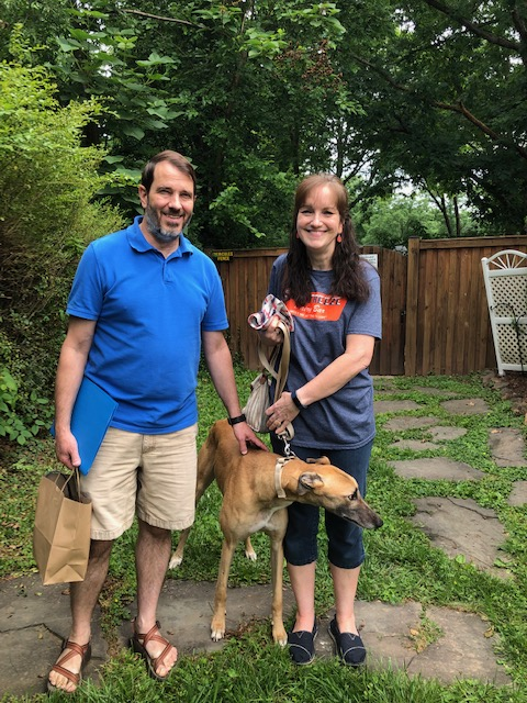 Please welcome Doreen and Randy with WWW Muhammad Ali, now called Buddy! Doreen and Randy are empty nesters. They realized what their home was missing was a new dog and this time they decided a greyhound would be the perfect fit. Welcome Buddy! He is working very hard to learn stairs and slept all night through the first night.  Congratulations to Buddy, Doreen and Randy!