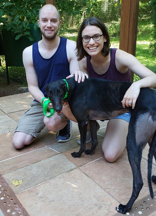 Blue Ridge Greyhound Adoption