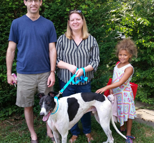 "CONGRATULATIONS to Emily, Warren & Lily on the addition of Shane (race name Rico's Shane) to their family. Shane is a very handsome, sweet, and friendly 5 year old ""cow dog""who loves meeting new people on walks and doesn't hesitate to lean on you the minute your start petting him. He was fostered for a couple weeks and then met his new family at a Meet & Greet. It was love from the start and one week later he joined the family.  Please welcome Shane to the BRGA Pack!"