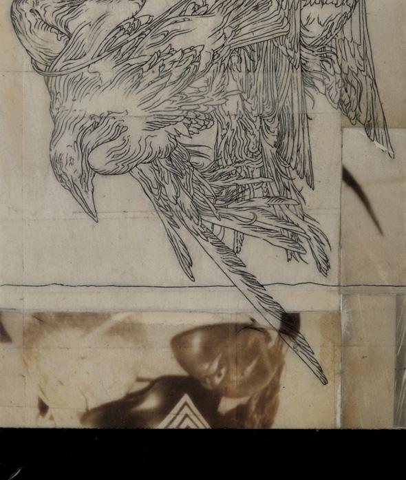 birds_det.jpg