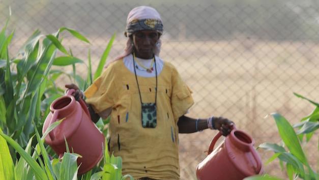 greening-the-niger.jpg