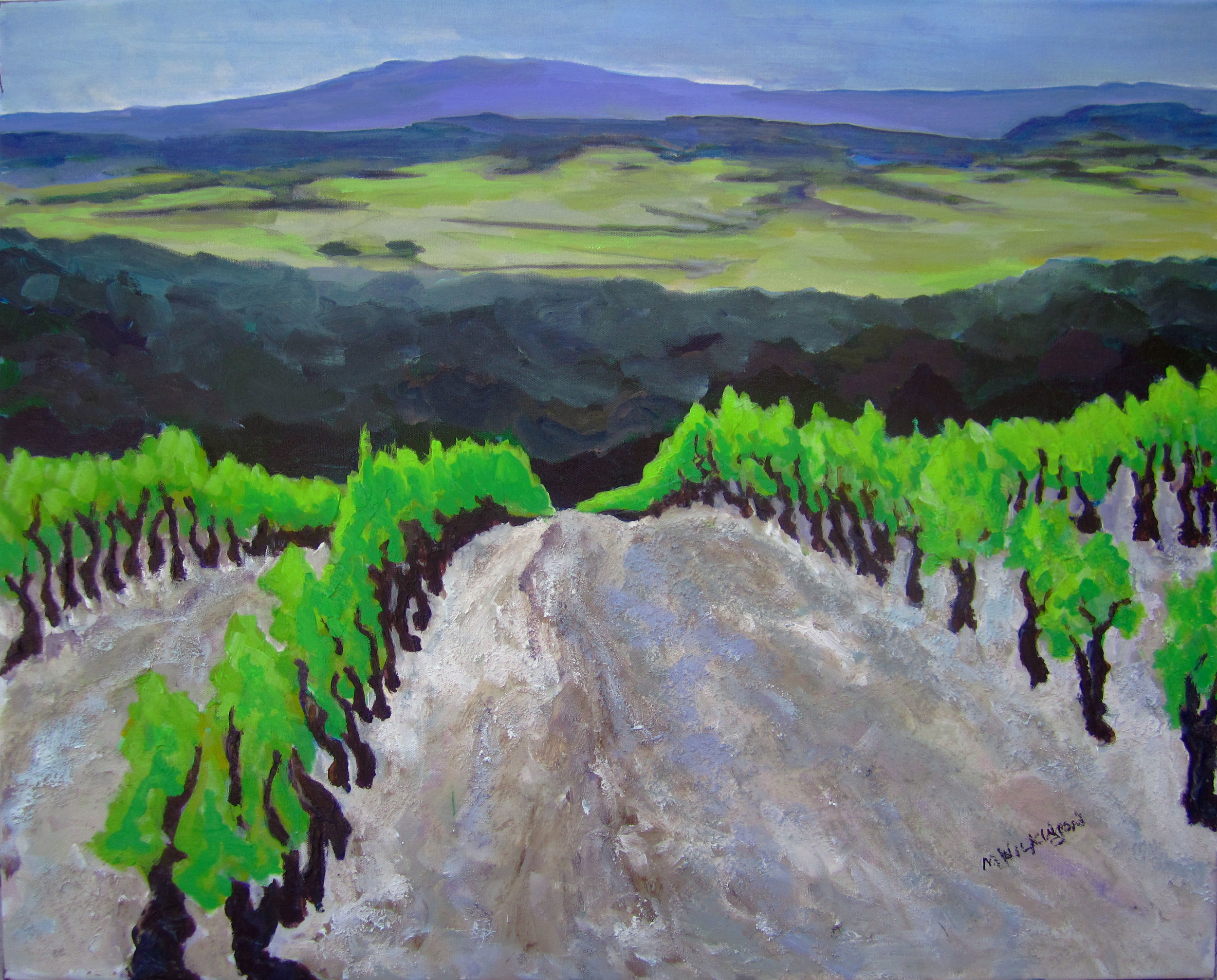 vines of luberon