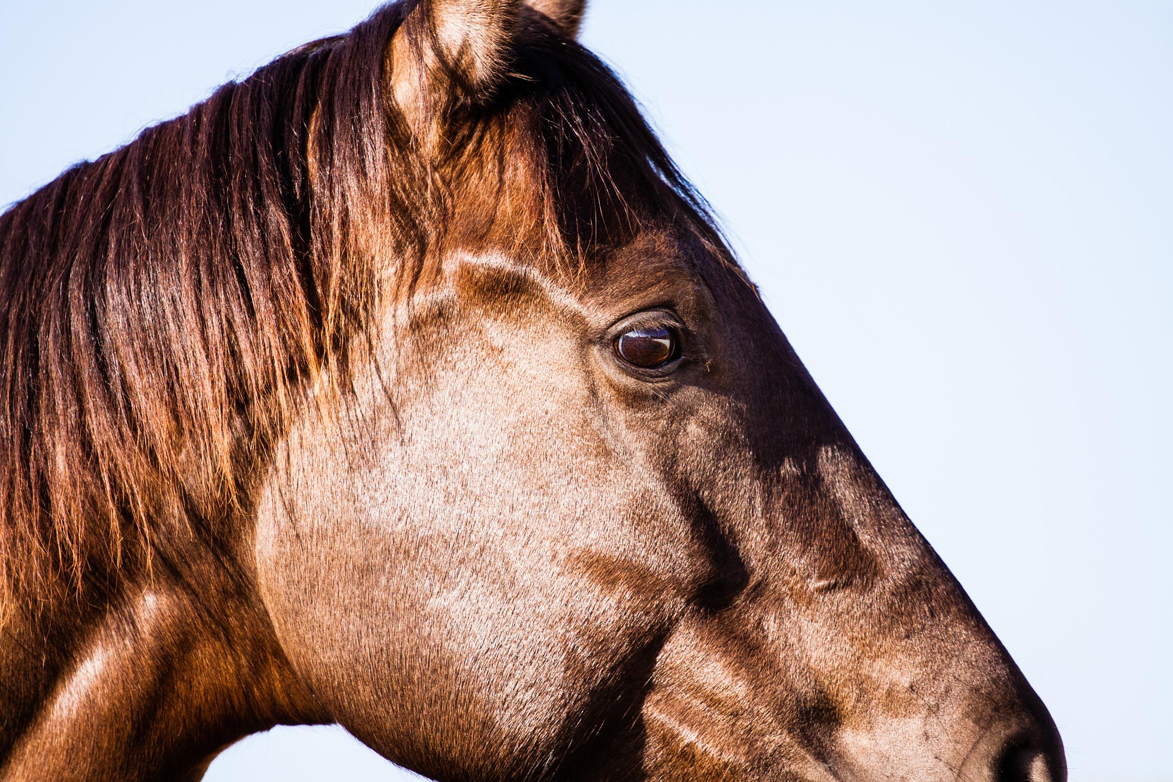 Brooke_Horses_web-03.jpg