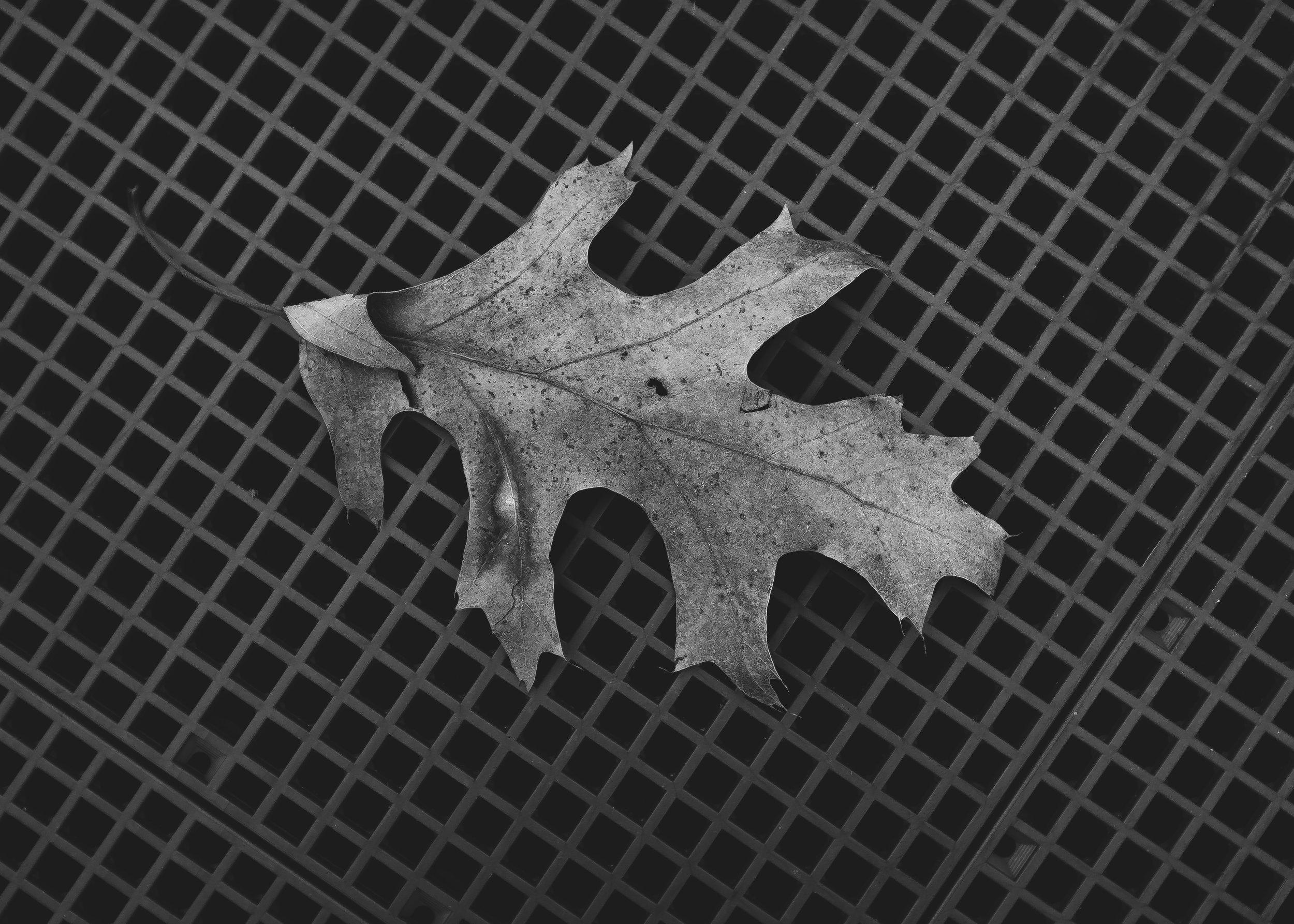 Leaf NB.jpg