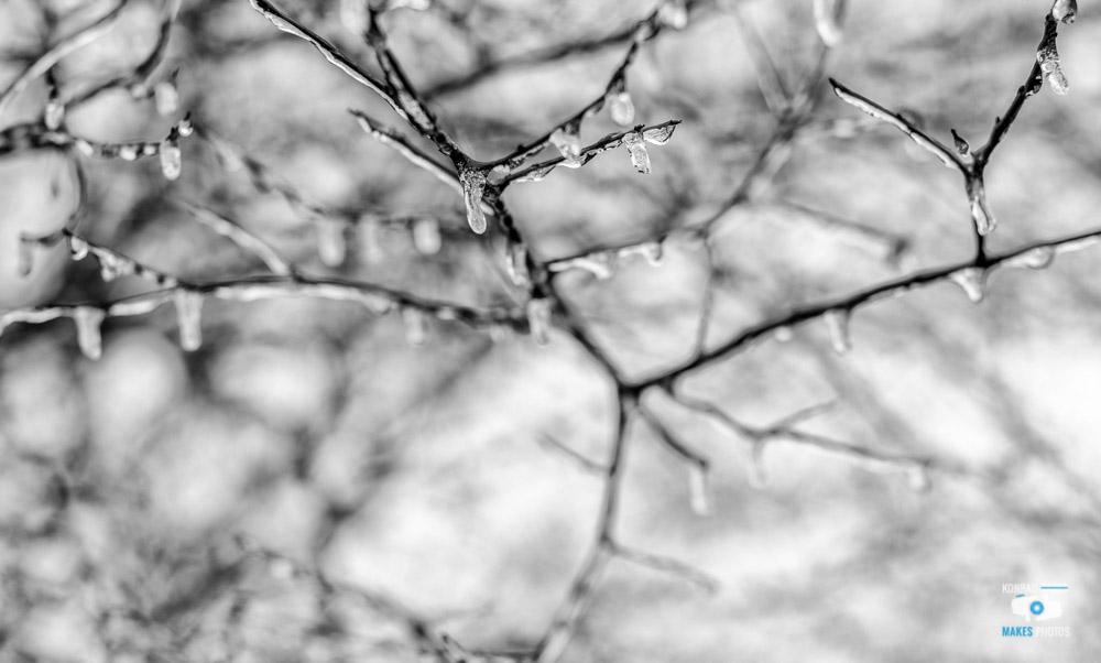 memphis-ice-storm-icicles-tree-4.jpg