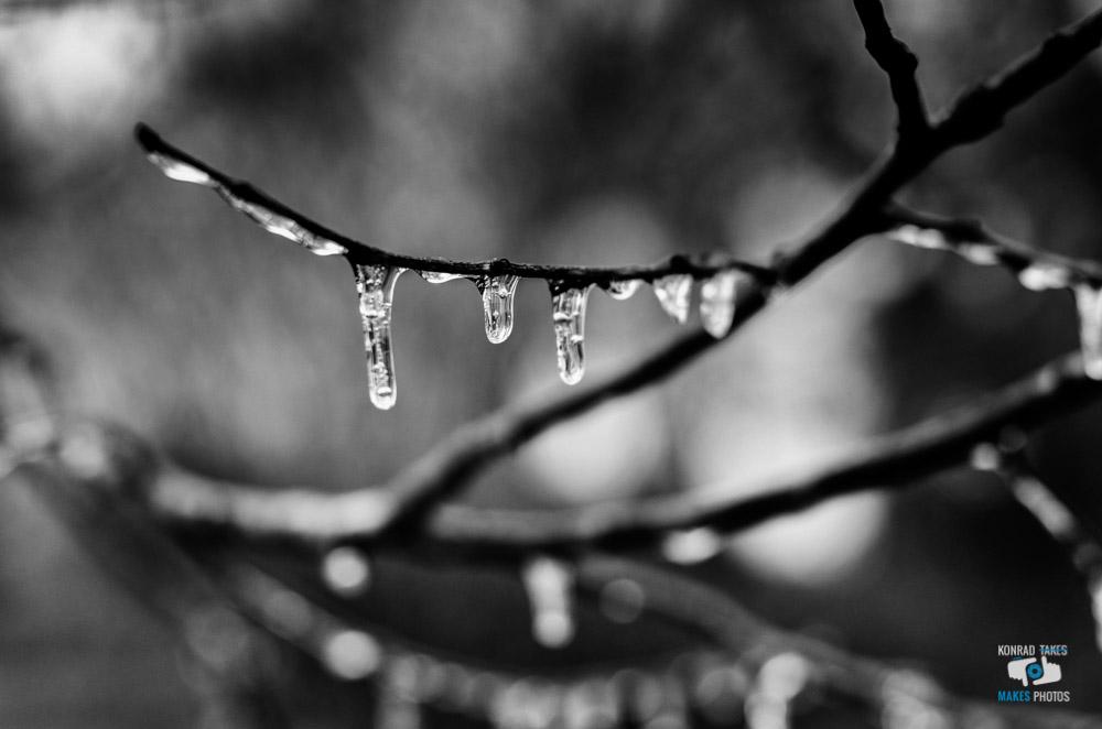 memphis-ice-storm-icicles-tree.jpg