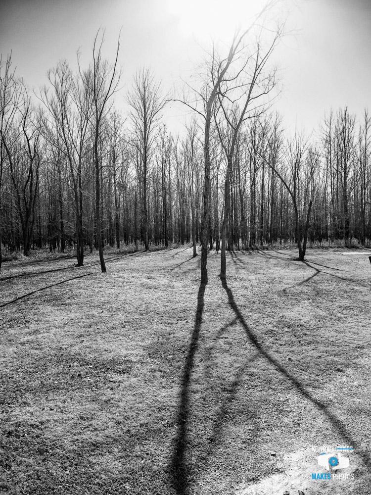Winter-Walk-Black-and-White-1.jpg