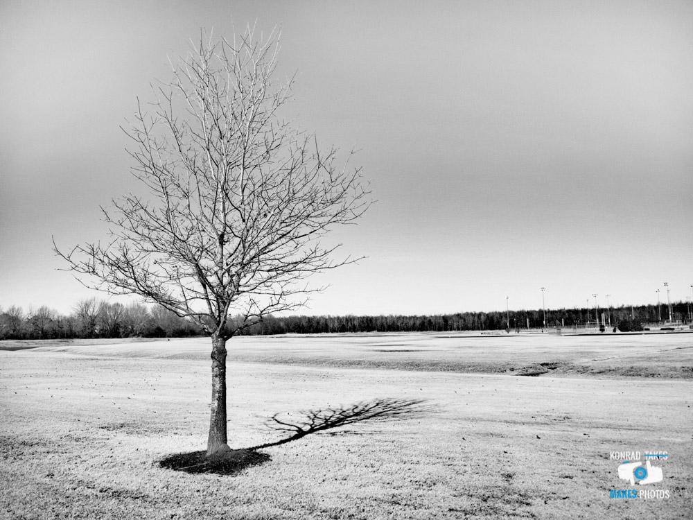 Winter-Walk-Black-and-White-4.jpg