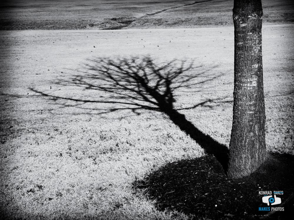 Winter-Walk-Black-and-White-5.jpg
